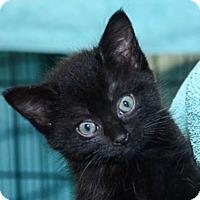 Adopt A Pet :: Kathleen - Reston, VA