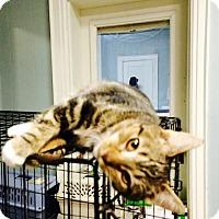 Adopt A Pet :: Tina - Chattanooga, TN