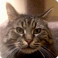 Adopt A Pet :: Simon - Winchester, CA