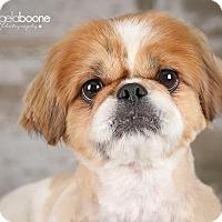 Adopt A Pet :: Theodore - Inver Grove, MN