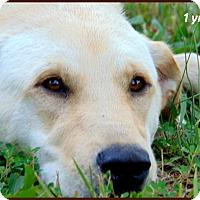 Adopt A Pet :: Rocky - Marlborough, MA