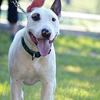 Adopt A Pet :: Neo - Tomball, TX