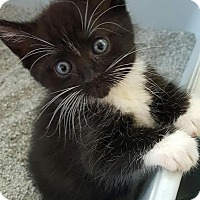 Adopt A Pet :: Whiskers - East Brunswick, NJ