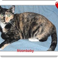 Adopt A Pet :: Moonbaby - Pensacola, FL