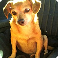 Adopt A Pet :: Jack is a great dog! - Redondo Beach, CA