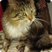 Adopt A Pet :: Seymour - Leamington, ON