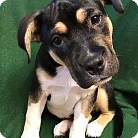 Adopt A Pet :: Kaizer - Los Banos, CA