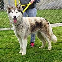 Adopt A Pet :: Harper - Lathrop, CA