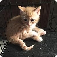 Adopt A Pet :: Fireball - Cocoa, FL
