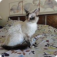 Adopt A Pet :: Zahara - Phoenix, AZ