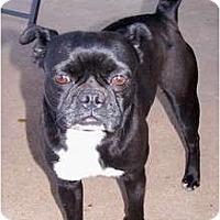 Adopt A Pet :: Ruby - San Angelo, TX