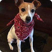 Adopt A Pet :: Tanzy in San Antonio - San Antonio, TX