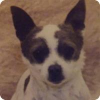 Adopt A Pet :: Paprika - Santa Rosa, CA