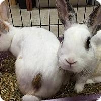 Adopt A Pet :: Tucker - Woburn, MA