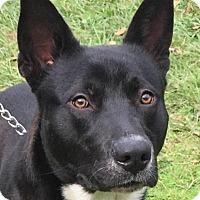 Adopt A Pet :: Michael - Orlando, FL