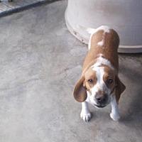 Adopt A Pet :: Bonnie - Bonifay, FL