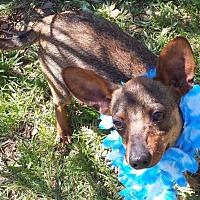 Adopt A Pet :: Kyle - Vernon, TX