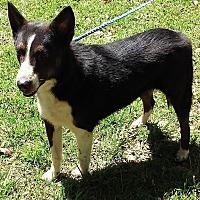 Adopt A Pet :: Dina - Ashland, AL