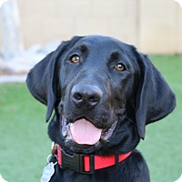 Adopt A Pet :: Milo - Litchfield Park, AZ
