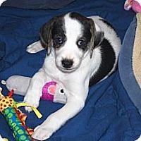 Adopt A Pet :: Mikey - Minneola, FL