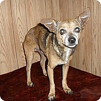 Adopt A Pet :: Pepper - Chandlersville, OH