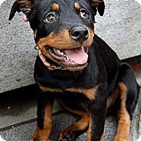 Adopt A Pet :: Vinci - Temple City, CA