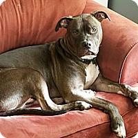 Adopt A Pet :: HUCKLEBERRY the Magnificent! - Durham, NH