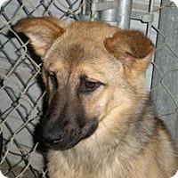 Adopt A Pet :: Hera - Seattle, WA