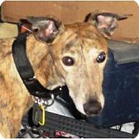 Adopt A Pet :: Cha Ching - Orange County, CA