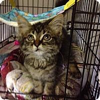Adopt A Pet :: Ducky - Byron Center, MI