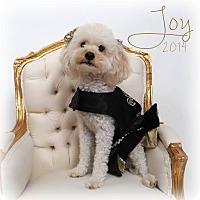 Adopt A Pet :: Joy - New Orleans, LA