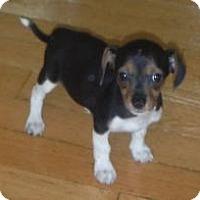 Adopt A Pet :: Lilo - Marlton, NJ