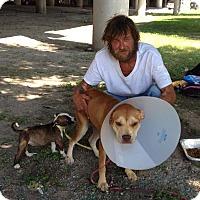 Adopt A Pet :: Sandy - Missouri City, TX