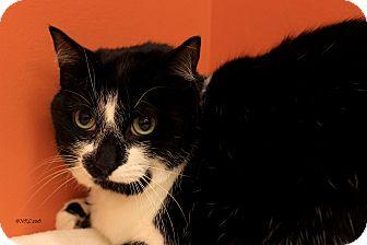 Domestic Mediumhair Cat for adoption in Flushing, Michigan - Mandy
