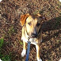 Adopt A Pet :: Piper - Lodi, CA