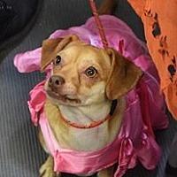 Adopt A Pet :: Riley - Ozone Park, NY