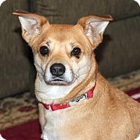 Adopt A Pet :: Melody - Harrison, NY