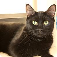 Adopt A Pet :: Nymeria - Harrisonburg, VA
