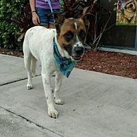 Adopt A Pet :: Sanders - Maquoketa, IA