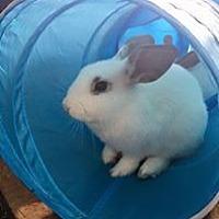 Adopt A Pet :: Candy - San Antonio, TX