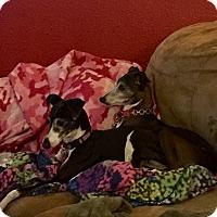 Adopt A Pet :: Angel & Stella - Costa Mesa, CA