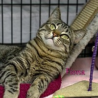 Adopt A Pet :: Fiona - Albuquerque, NM