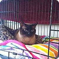 Adopt A Pet :: Paige - lake elsinore, CA