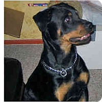 Adopt A Pet :: Zelda - Scottsdale, AZ