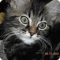 Adopt A Pet :: Oliver - Riverside, RI