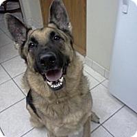 Adopt A Pet :: King - Green Cove Springs, FL
