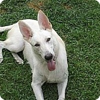 Adopt A Pet :: Isabel - Green Cove Springs, FL
