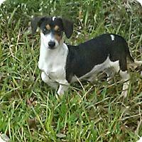 Adopt A Pet :: Lauriel - Beaumont, TX