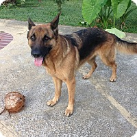 Adopt A Pet :: Kikka - Pompano Beach, FL