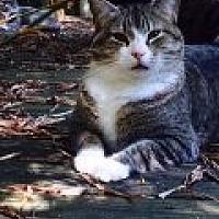 Adopt A Pet :: Timmy - Naples, FL